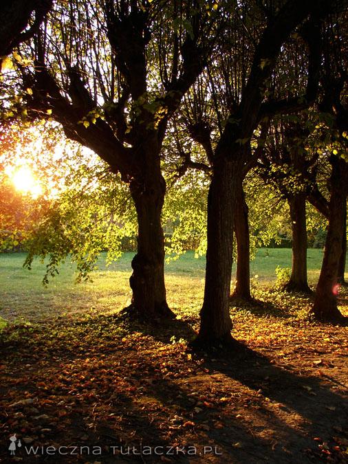 Park w Ostromecku