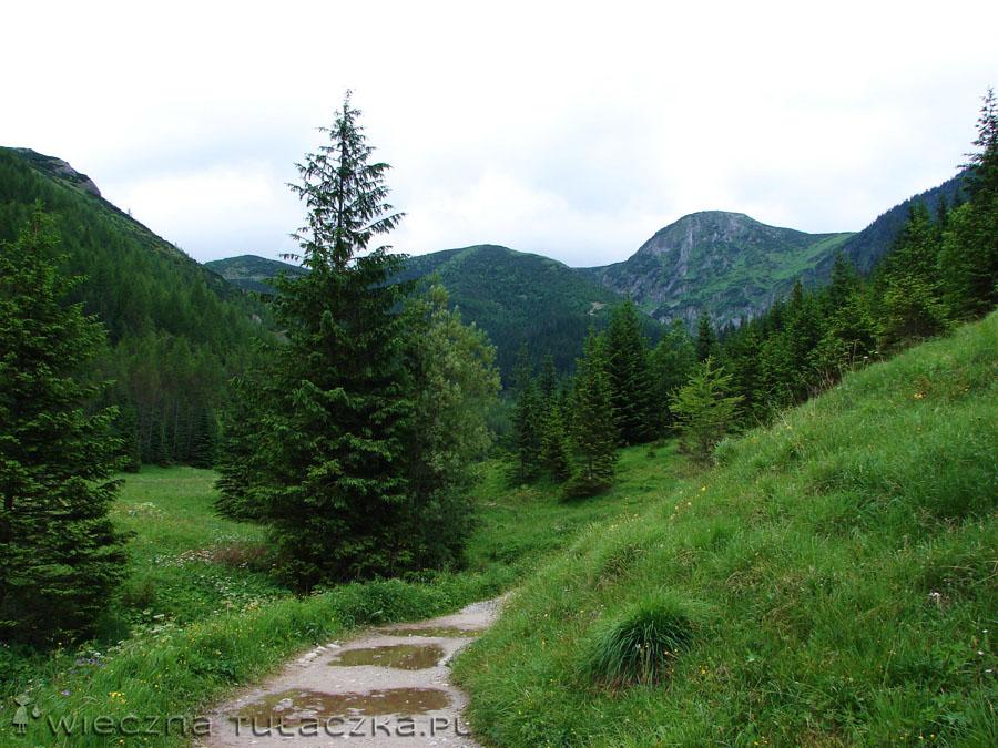 Dolina Jaworzynka