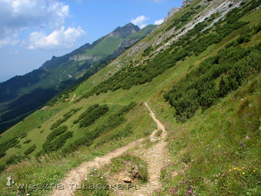 Ścieżka w Dolinie Zadnich Koperszadów