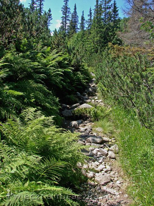 Szlak zielony z Gęsiej Szyi na Halę Gąsienicową