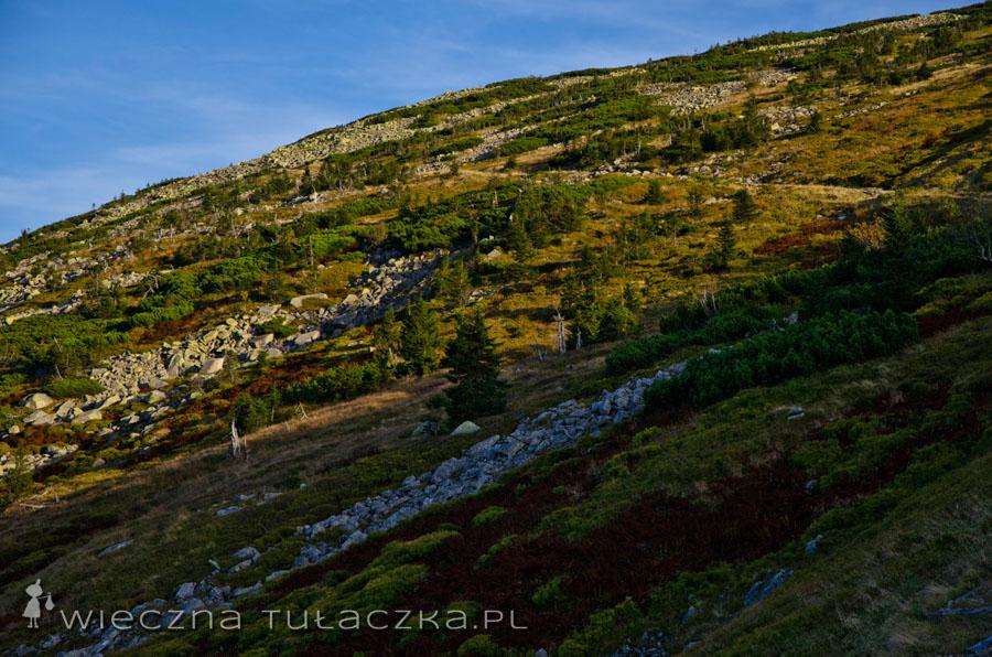Szlak na zboczach Łabskiego Szczytu