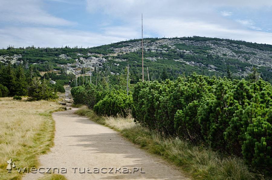 Czerwony szlak, podejście na Czeskie Kamienie