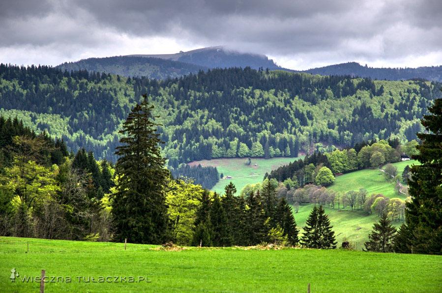 Mimo to, Szwarcwald pozostaje największym zalesionym obszarem Niemiec.