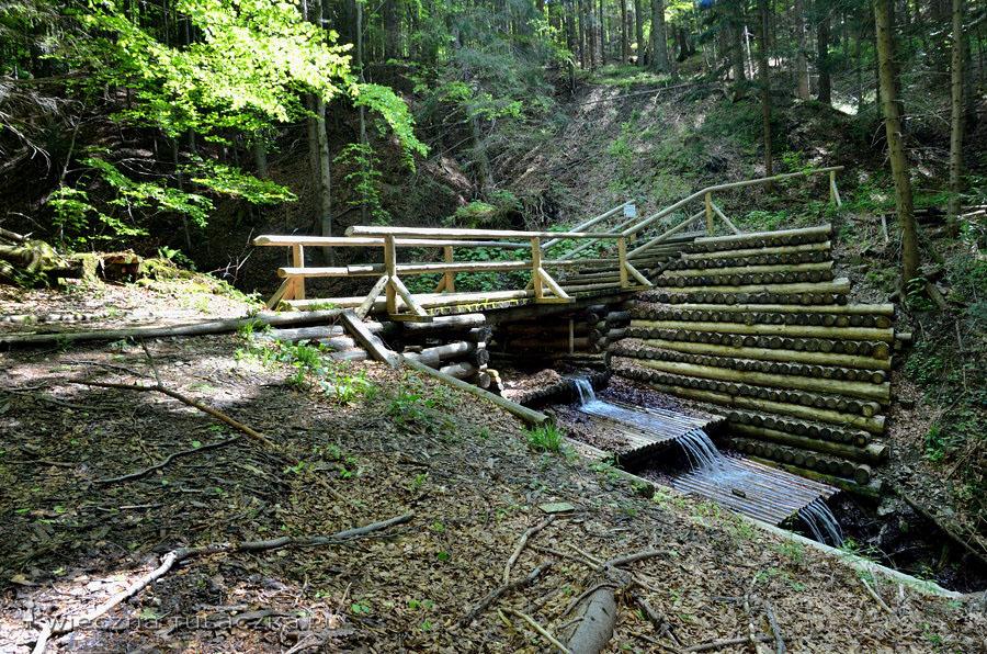 Leśny fragment ścieżki
