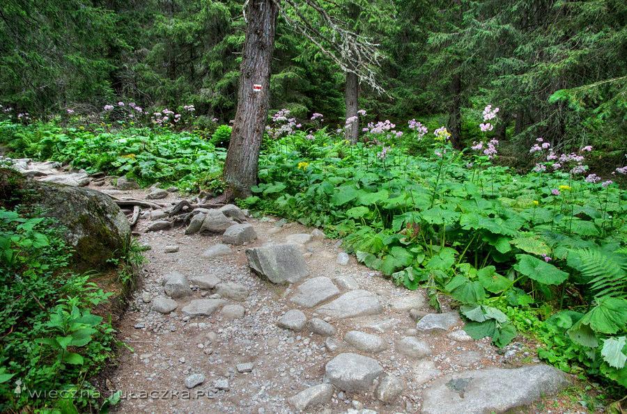 Szlak łączący Popradzki Staw i Szczyrbskie Jezioro
