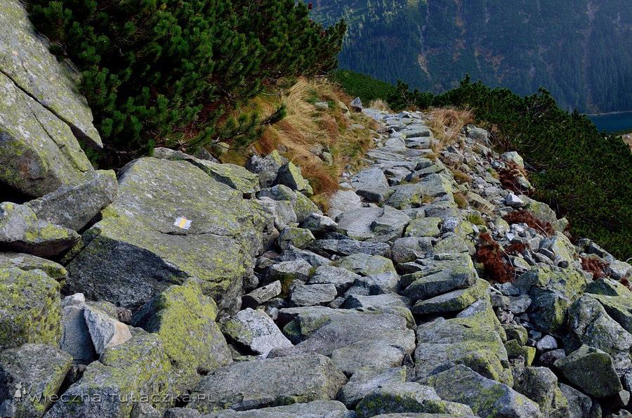 Ceprostrada - żółty szlak na Szpiglasową Przełęcz