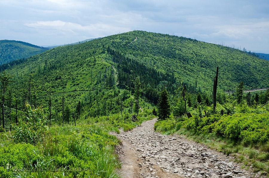 Zielony Kopiec, Beskid Śląski