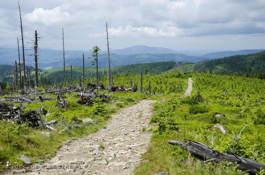 Szlak głównym grzbietem Beskidu Śląskiego.
