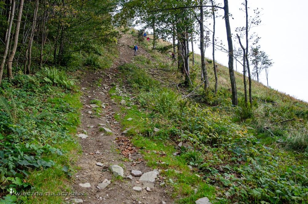 Szlak na Rycerzową