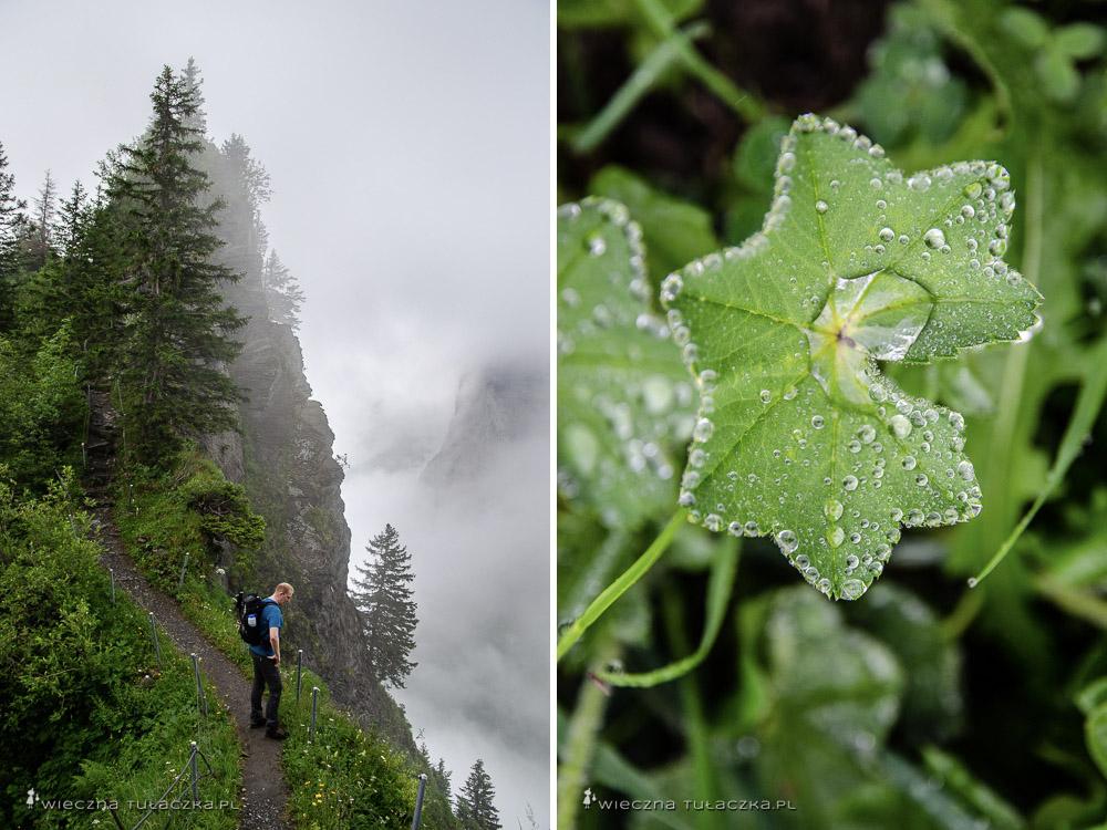 Via Alpina, szlak w Szwajcarii