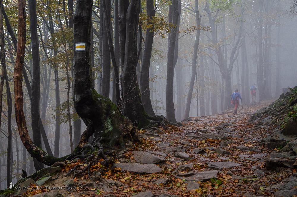 Żółty szlak do schroniska Chatka Puchatka