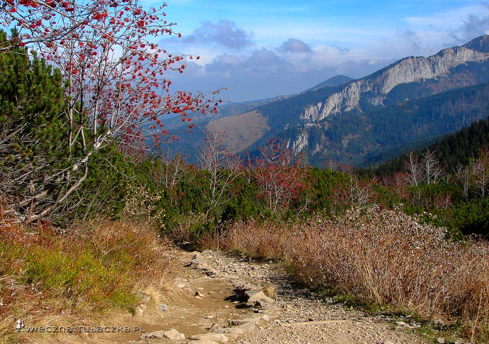 Szlak w Dolinie Kondratowej