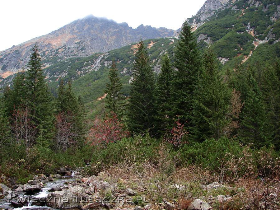 Potok Roztoka, nad nim próg Buczynowej Dolinki