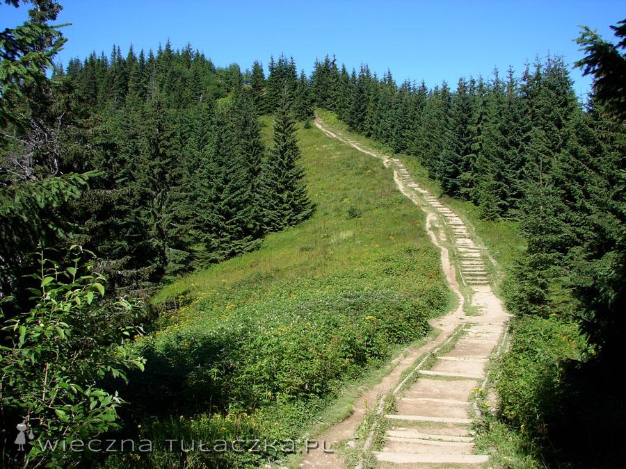 Zielony szlak na Gęsią Szyję