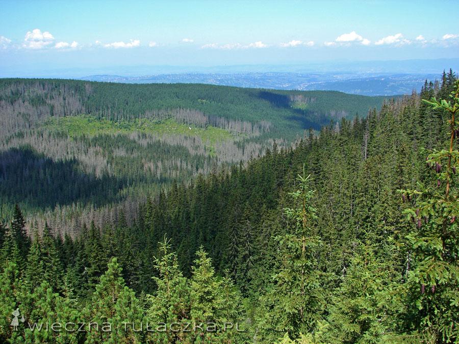 ...przez chwilę odsłaniają się widoki na las ;) i Podhale :)