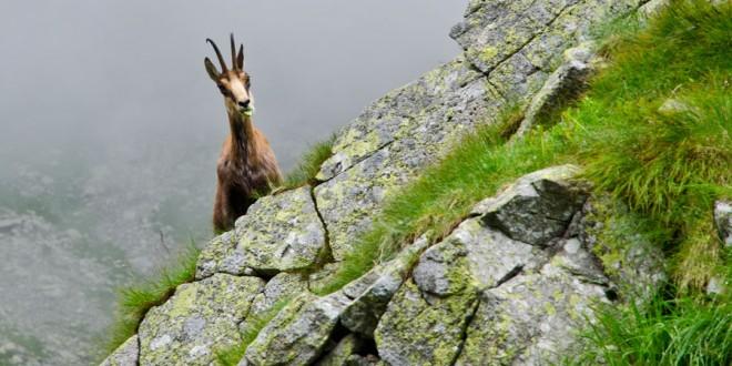 TATRY: Tour de Kozia Przełęcz