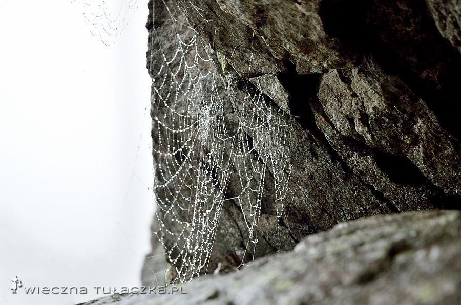 W międzyczasie wypatrzyłam pajęczyny, bez właścicieli.