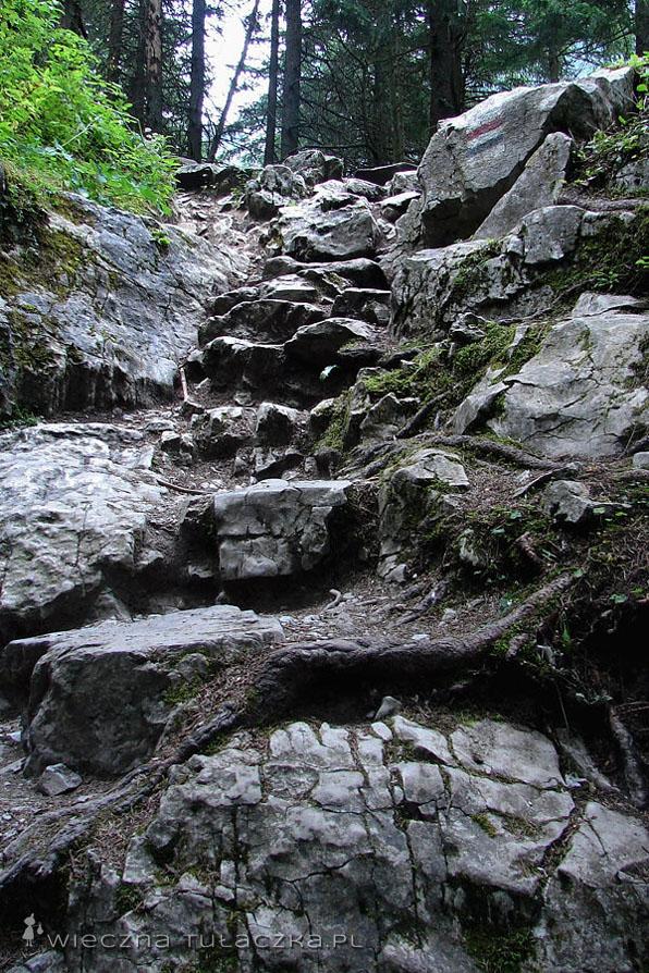 Szlak do Jaskini Raptawickiej i Mylnej