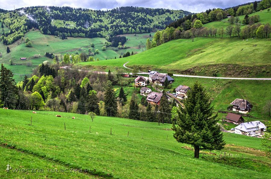 Szwarcwald (Schwarzwald) oznacza Czarny Las.