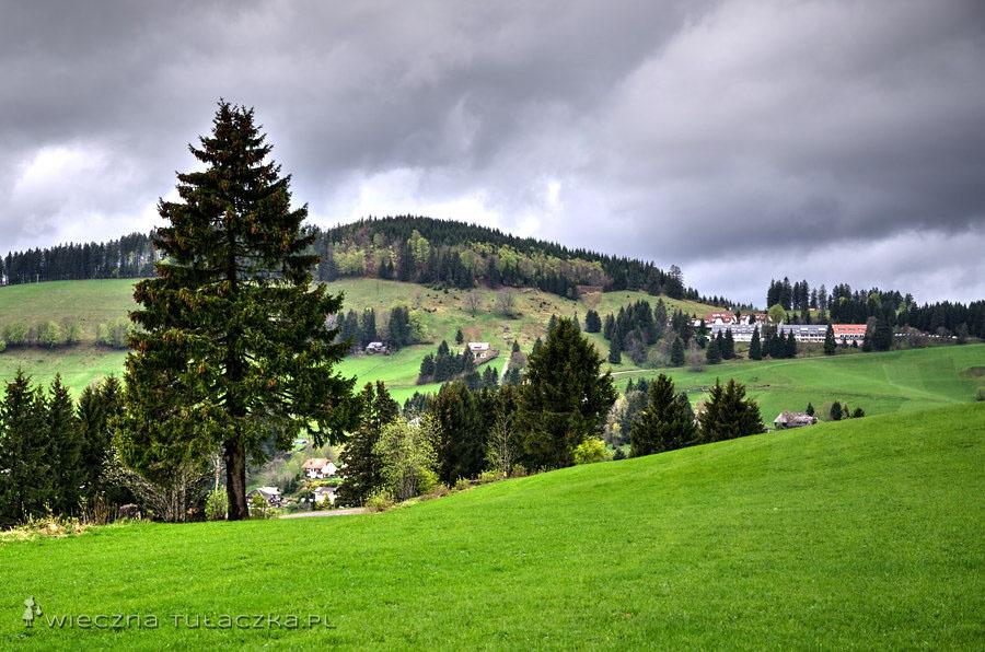 Całe połacie gęstego jodłowego lasu wycięto na rzecz powstających osad, pól uprawnych, a później tras narciarskich.