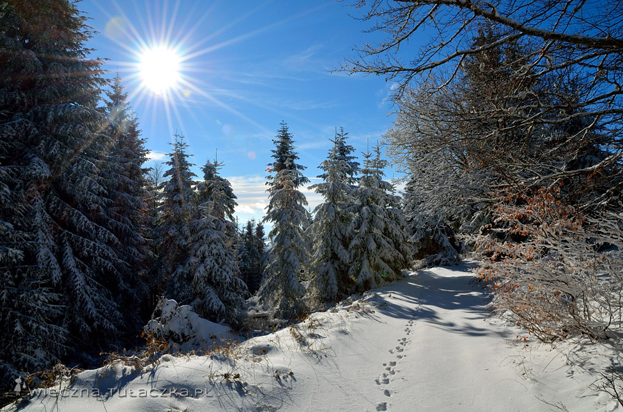 Beskid Sądecki zimą