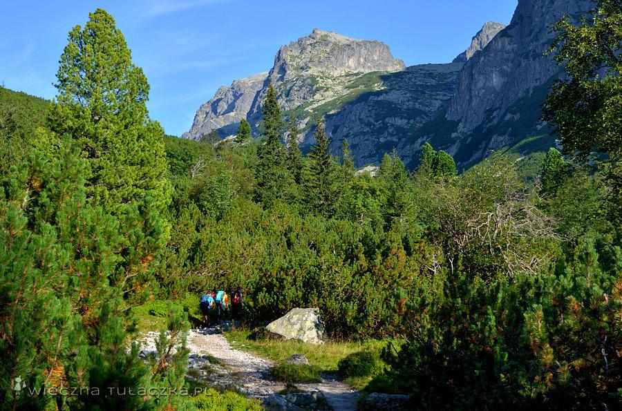 Dolina Staroleśna, widok na Strzelecką Turnię