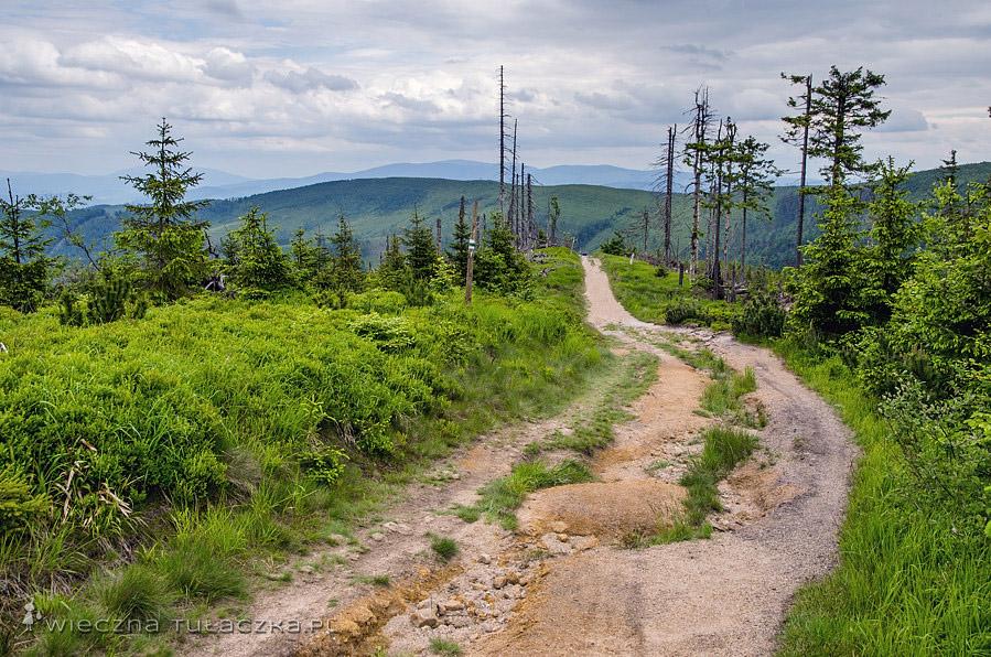 Zielony szlak, Beskid Śląski