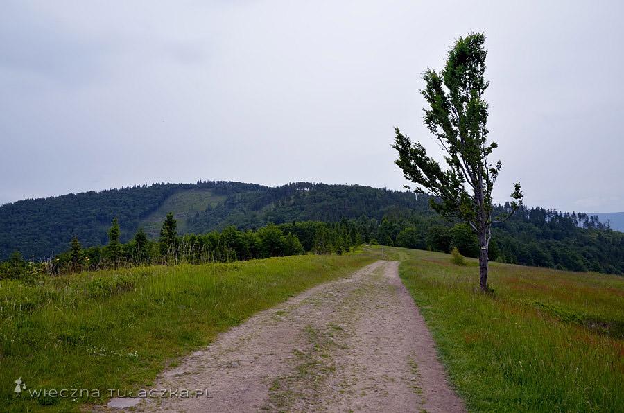 Żółty szlak pomiędzy Klimczokiem a Błatnią