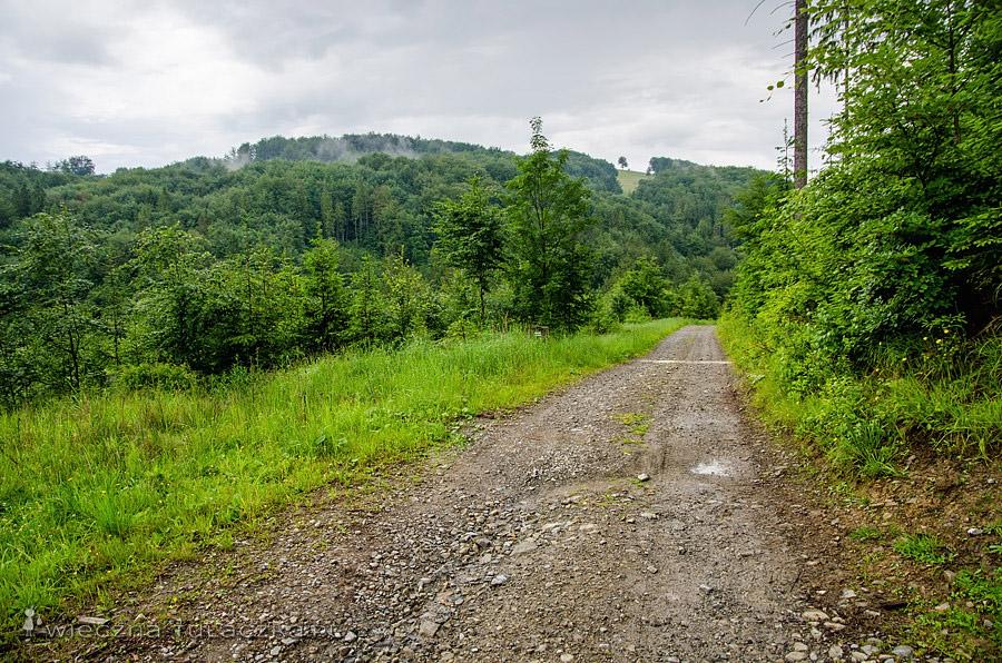 Dolina Leśnicy, zielony szlak