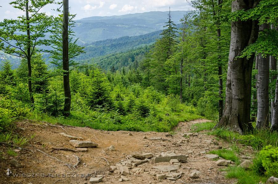 Żółty szlak z Jawierznego na Przełęcz Salmopolską
