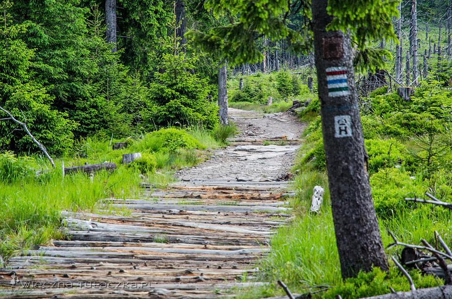 Szlak na Przysłop pod Baranią Górą