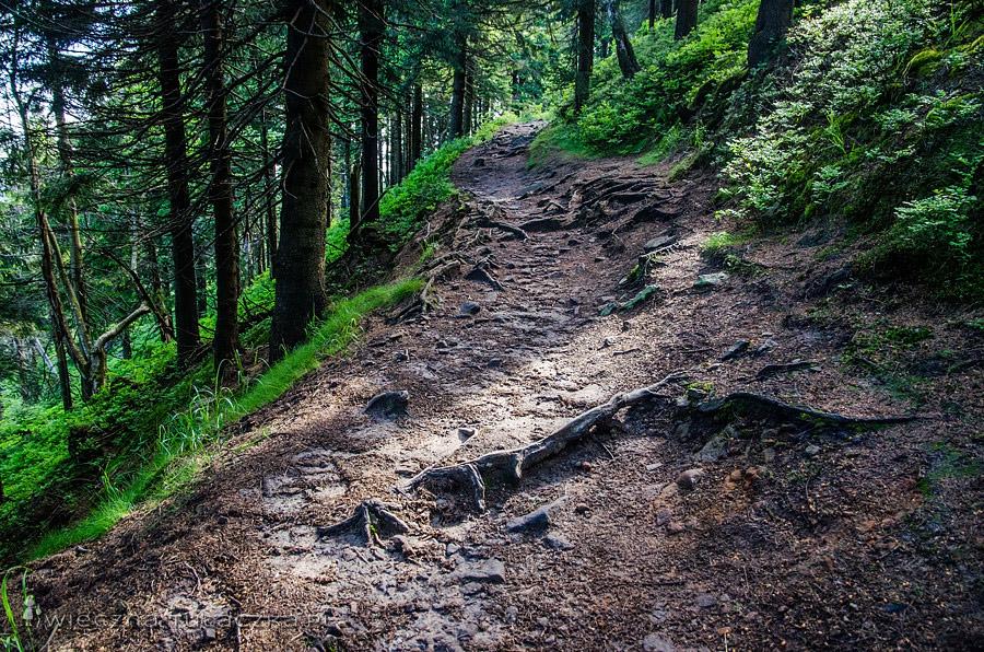 Szlak na Baranią Górę