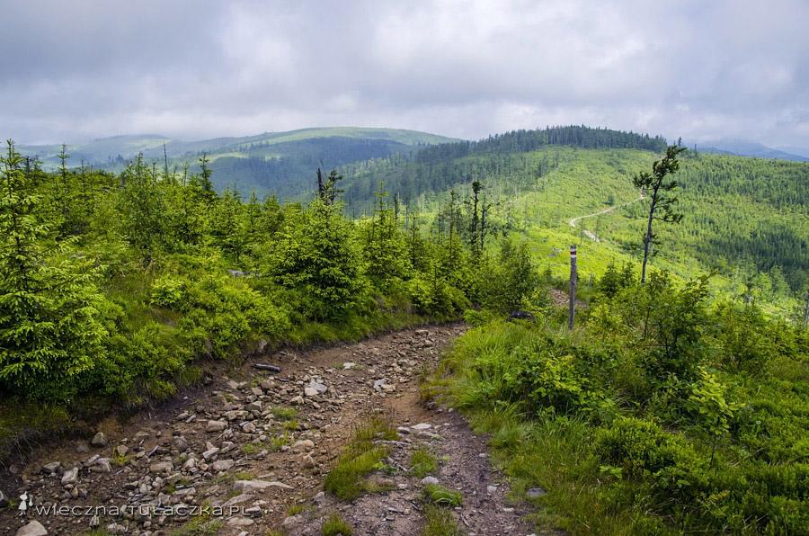 Szlak pomiędzy szczytem Glinne a Halą Radziechowską