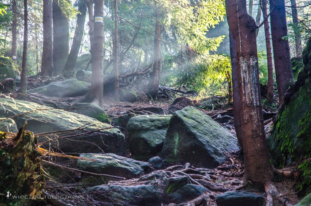 Fragment żółtej ścieżki pod Przełęczą między Szczelińcami