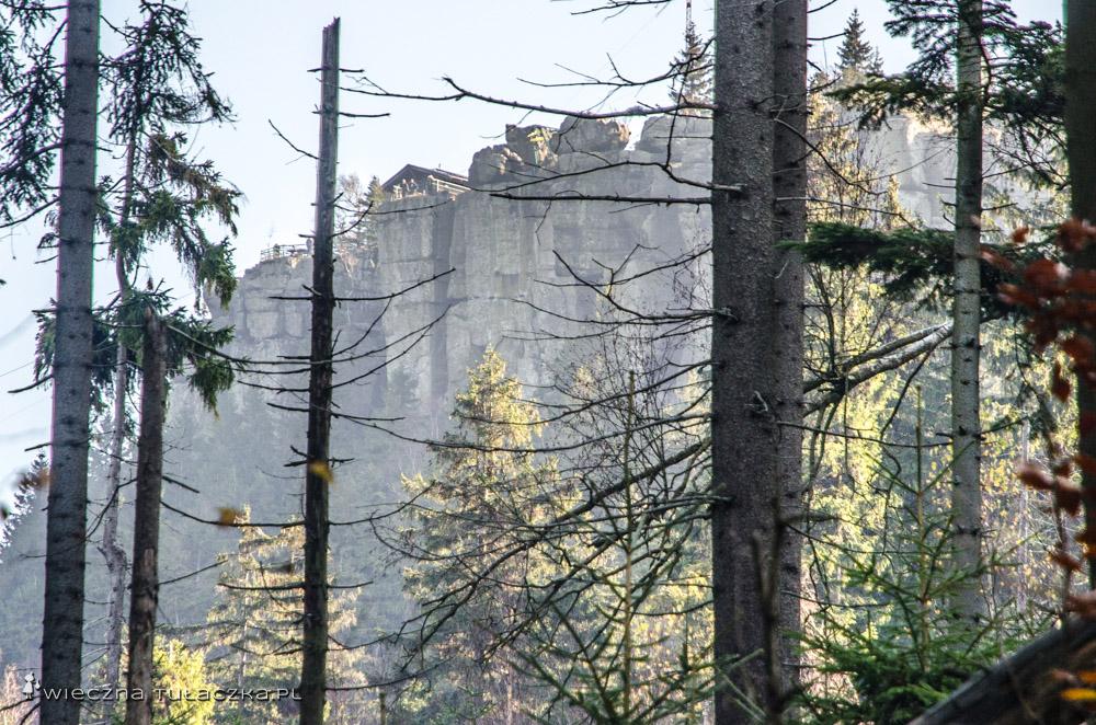Między drzewami można wypatrzeć Wielkie Tarasy, znajdujące się obok schroniska
