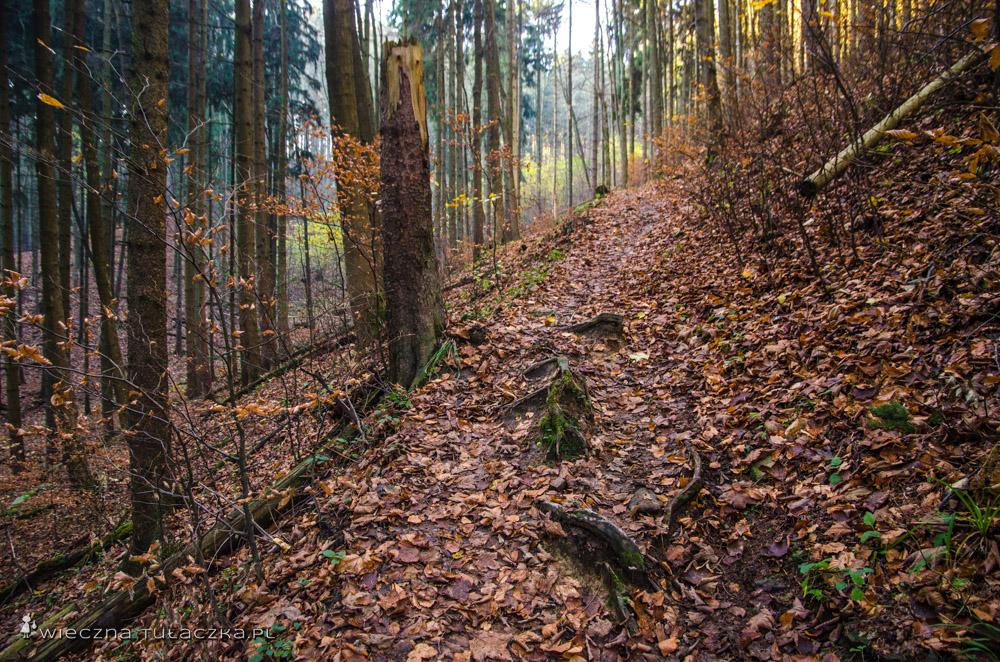 Czerwony szlak, będący fragmentem Głównego Szlaku Sudeckiego