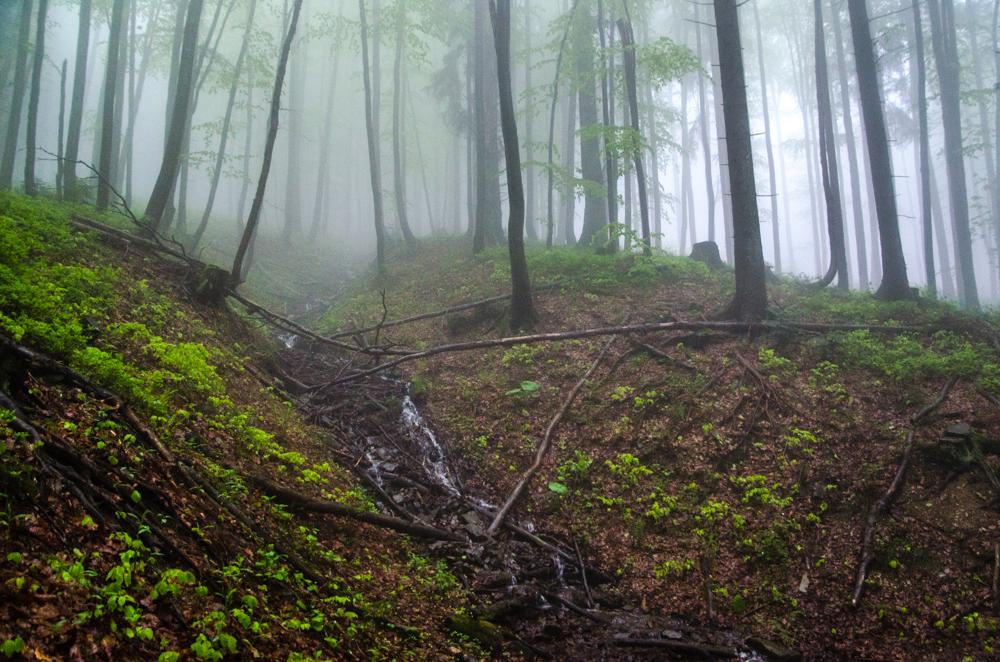 Leśne odcinki też są klimatyczne
