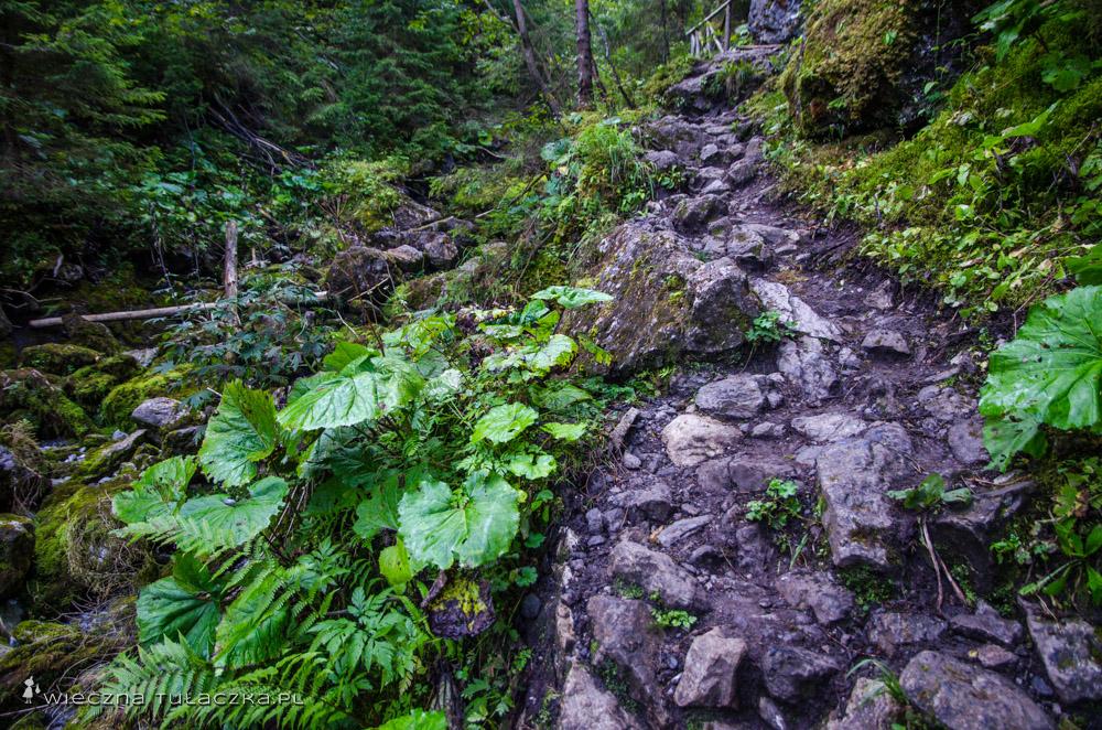 Szlak na Szeroką Przełęcz Bielską