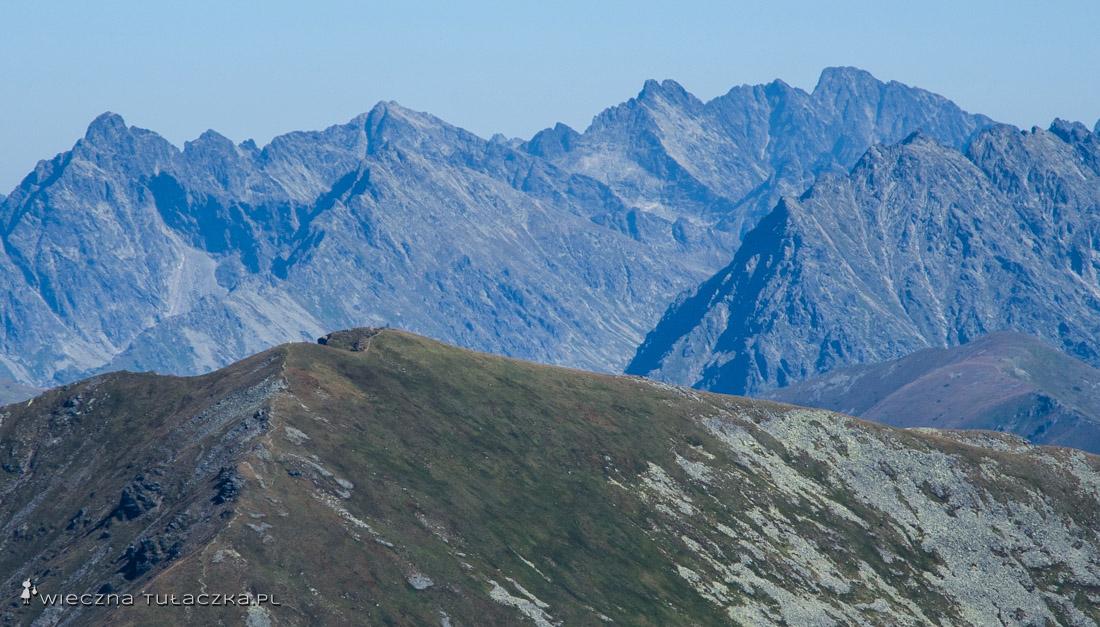 Panorama Tatr Wysokich ze Starorobociańskiego Wierchu