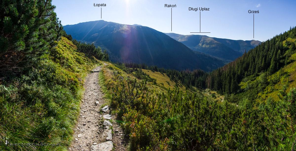 Szlak z Trzydniowiańskiego Wierchu przez Jarząbczą Dolinę