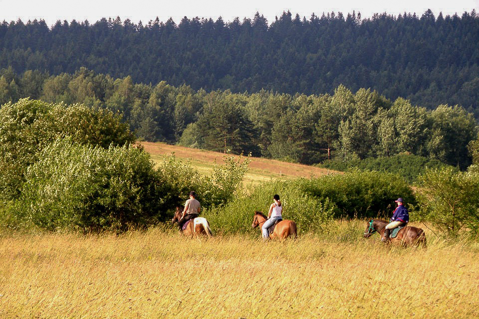 Beskid Niski można śmiało zwiedzać na końskim grzbiecie. Źródło: huculy.com.pl