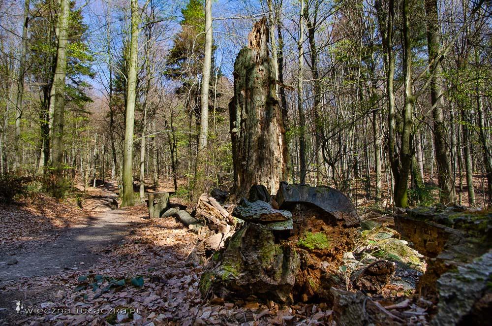Puszcza Jodłowa w Świętokrzyskim Parku Narodowym