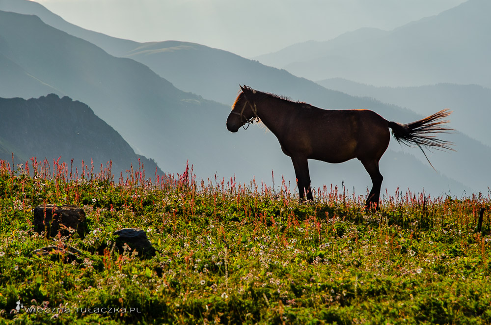 Kaukaz, Gruzja