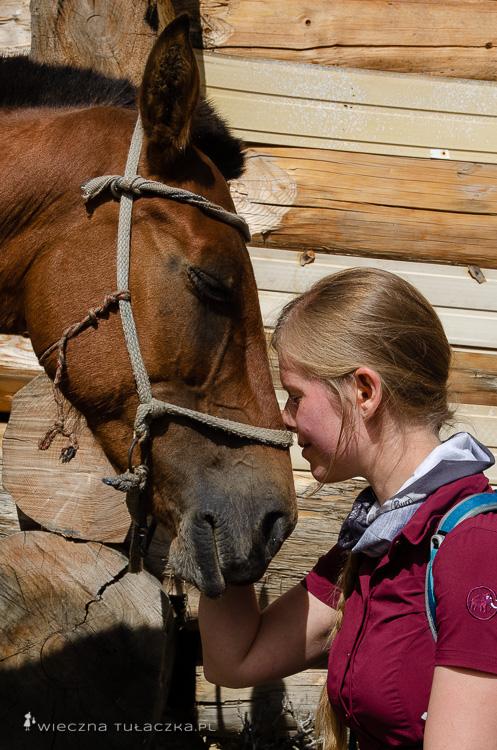 Konie w Gruzji