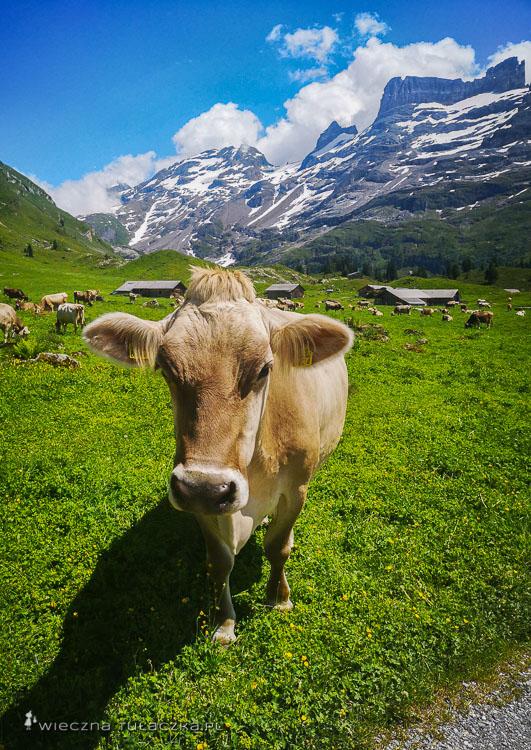 Via Alpina, Engstlenalp