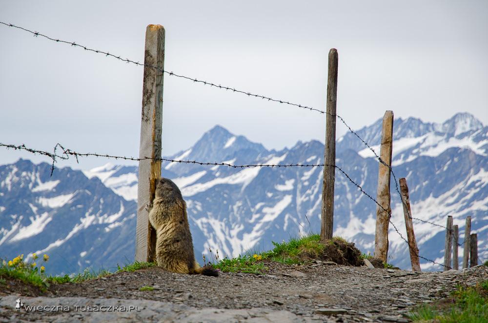Via Alpina, Szwajcaria