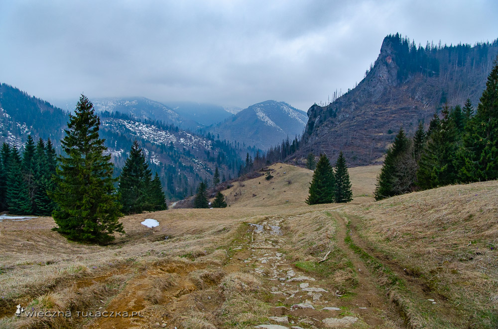 Gdzie znaleźć krokusy w Tatrach