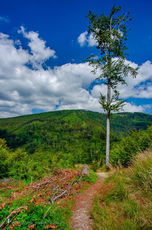 Szlak na Kotarz w Beskidzie Śląskim