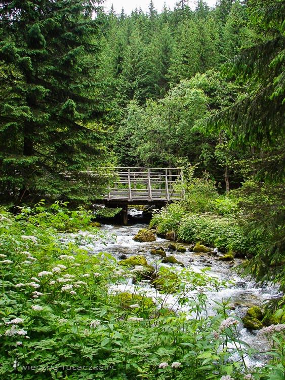 Potok Bystra w Tatrach