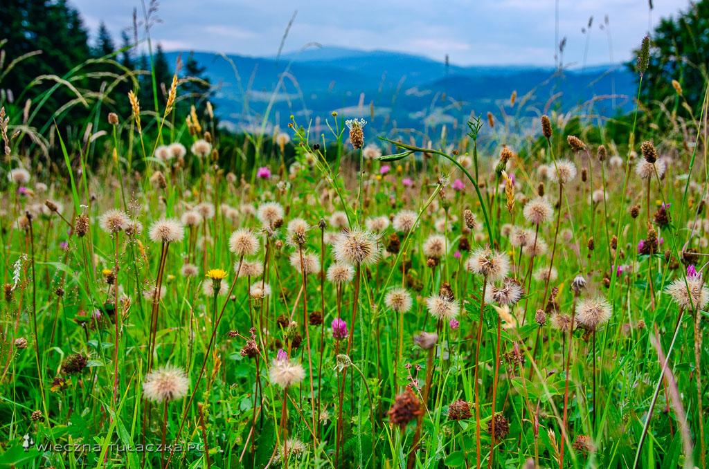 Kwiaty na polanie